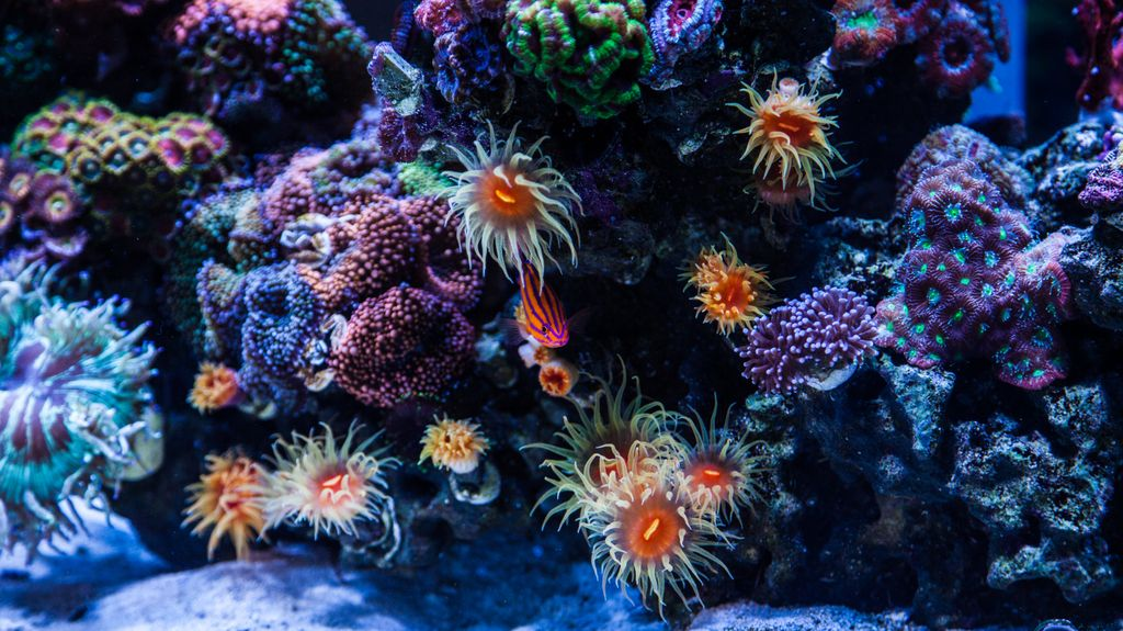 Socalireefs Community Medred Featured Reef