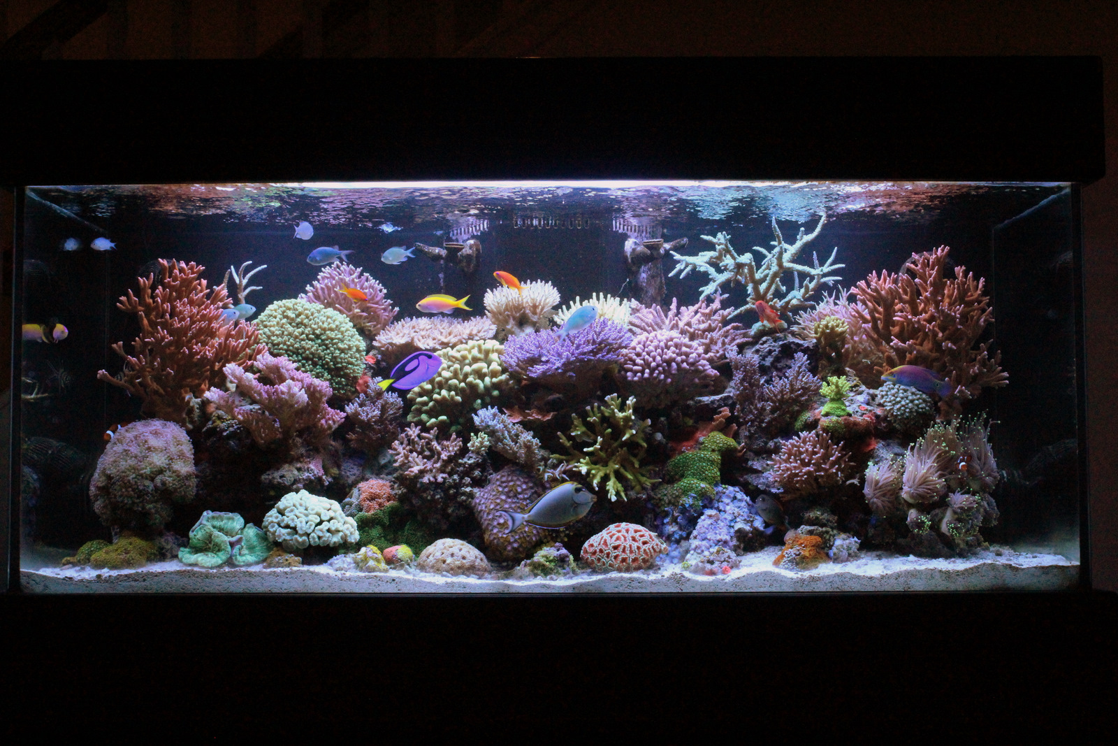 Socalireefs community chris023 featured reef tank for 150 gallon fish tank